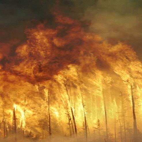 forest_fire ΚΑΜΜΕΝΗ ΓΗ