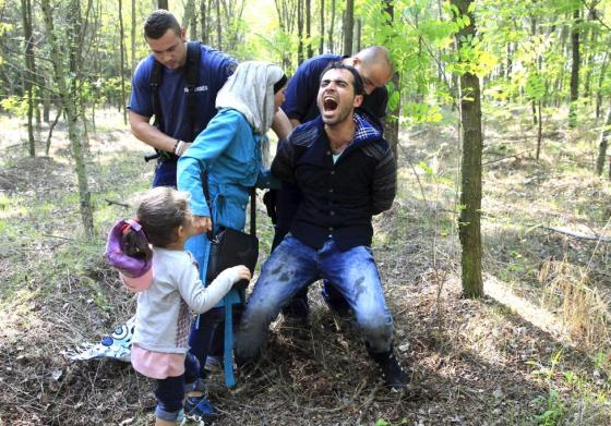 Hungarian policemen detain a Syrian migrant family after they entered Hungary at the border with Serbia, near Roszke, August 28, 2015. REUTERS/Bernadett Szabo