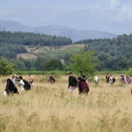 Migrants run towards Gevgelija in FYROM after crossing Greece's border, FYROM , August 22, 2015. REUTERS/Ognen Teofilovski