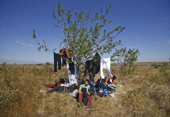 Syrian migrants rest under a tree during their walk towards the Greece border on a road near Edirne, Turkey, September 15, 2015. REUTERS/Osman Orsal