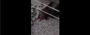 turkish-police-shot-2-kurds-in-the-head-in-amed-erdogans-gangs-started-street-executions-in-broad-daylight