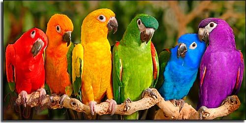 parrots-copy-jpeg