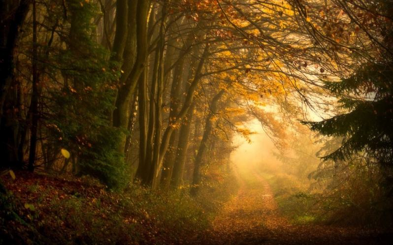 sun-rays-morning-wallpaper-forest-nature-wallpapers