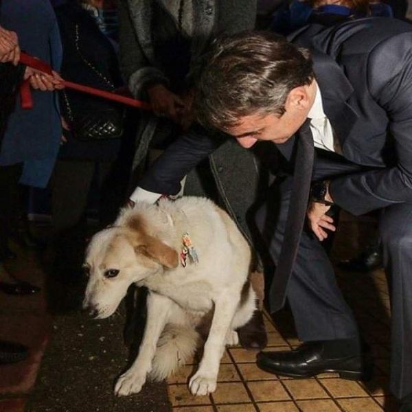 Τα σκυλιά μπορούν να καταλάβουν έναν κακό άνθρωπο σύμφωνα με την επιστήμ