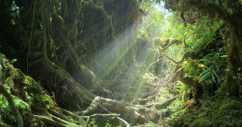 sun-light-rays-and-beams-shine-through-jungle-forest-canopy-on-mossy-tree-roots_stzn7ljrx_thumbnail-full05