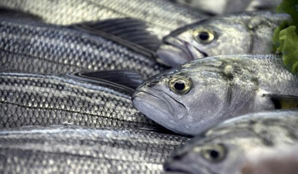 Αυτά είναι τα 9 ψάρια που καλό είναι νααποφεύγουμε!