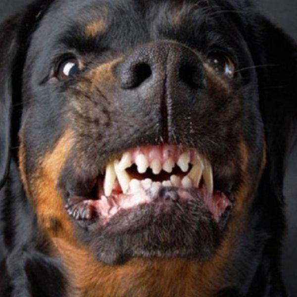 🆘Εκπαιδευτής σκύλων 🐕🐩 στο KONTRA news : ✅Ο Σκύλος δεν επιτίθεται χωρίς λόγο 🆘Τι πρέπει να κάνετε όταν έχετε παιδί στο σπίτι #ροτβαιλερ #rottweiler 📺Κεντρικό δελτίο KONTRA NEWS με τον @GiorgosMelingon https://youtu.be/MGW8-XwhNQk