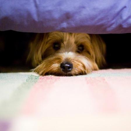 Μπορεί η είδηση πως ένας σκύλος στοΧονγκ Κονγκ βρέθηκε θετικός στο νέο κορονοϊό, τελικά να μην επιβεβαιώθηκε, αλλά αυτό δεν άμβλυνες τις ανησυχίες πολλών που βρήκαν ευκαιρία να τα εγκαταλείψουν στο δρόμο, με αποτέλεσμα το φαινόμενο να έχει γίνει δραματικό την τελευταία περίοδο [youtube https://www.youtube.com/watch?v=RWDGmT_SuBE] O σκύλος στο Χονγκ Κόνγκ είχε χαμηλού επιπέδου μόλυνση και δεν επιβεβαιώθηκε ότι ασθένησε από τον κορονοιό. Αυτό όμως δεν πρέπει να μας καθησυχάζει, όχι για την μετάδοση του ιού από το κατοικίδιο, αλλά για του ίδιους κανόνες καθαριότητας που πρέπει να εφαρμόζουμε και στα αγαπημένα μας ζωάκια όπως και σε εμάς«Ο κορονοϊός SARS-CoV-2 μεταδίδεται από άνθρωπο σε άνθρωπο. Δεν υπάρχουν ευρήματα ερευνών που να υποστηρίζουν τη μετάδοση από άνθρωπο σε ζώο αυτή τη στιγμή» τόνισε στο Science η μικροβιολόγος Shelley Rankin για το περιστατικό του Χονγκ Κόνγκ.  Ωστόσο συστήνεται οι ιδιοκτήτες να λαμβάνουν όλα τα μέτρα ατομικής υγιεινής όταν έρχονται σε επαφή με κατοικίδια: να πλένουν τα χέρια τους, να καθαρίζουν επιμελώς τα πατουσάκια ειδικά των σκύλων μετά τη βόλτα,όσοι πάσχουν είτε να βάζουν οι ίδιοι σε καραντίνα τα ζώα τους είτε να φροντίζουν να μην έρχονται σε επαφή με άλλα ζώα.Καλό είναι να μην αφήνουμε να μας φιλάνε και να μας γλείφουν,πολύ καλά θα πρέπει να πλένουν τα χέρια τους και όσοι φροντίζουν αδέσποτα. Για το πως θα πρέπει να φροντίζουμε τα ζώα δείτε το βίντεο και τί εξηγεί η κτηνίατρος Γρηγορία Περράκη: Τόσο ο ΠΟΥ όσο και η κτηνίατρος συνιστούνπως οι ιδιοκτήτες θα πρέπει να πλέουν τα χέρια τους με σαπούνι και νερό προτού αγγίξουν τα κατοικίδια. Η κ.Περράκηλέει πως εάν οι ιδιοκτήτες σκύλων ανησυχούν ιδιαίτερα, μπορούν να σκουπίσουν τις πατούσες του σκύλου τους με το σαμπουάν του ή κάποιο άλλο απαλό αφρόλουτρο, αλλά ποτέ με αντισηπτικά μαντηλάκια γιατί με την αλκοόλημπορεί να ξηράνουν τις πατούσες του σκύλου. 